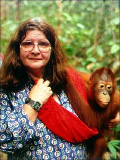 Birute Galdikas has dedicated her life to the study of Orangutans and is considered the third of Leakey's angels. I saw a lecture she gave and was blown away by her passion and commitment to these wonderful animals.