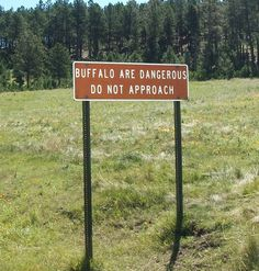why would I approach? Great Places, Places Ive Been, Custer State Park, South Dakota, Home And Away, State Parks, National Parks, Wildlife, Adventure