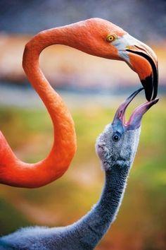 ~~Carribean Flamingos by Donna Eaton~~
