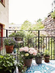 Flowers and potted plants on the balcony.