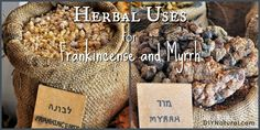 Frankincense and Myrrh - And The Many Ways to Use Them – Using Frankincense and myrrh as healing agents goes back to bible times. Today we show you many different ways to use them along with a tincture and soap recipe.