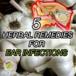 5 Herbal Remedies For Ear Infections