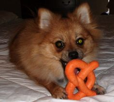 Missy and her Wetzel's Pretzel toy