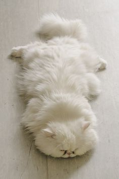 No one will notice me napping on this white floor.