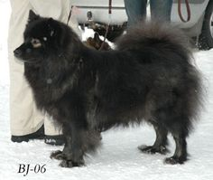 Lovely black with spectacles. Dogs, Animals, Beautiful, Black, Animales, Animaux, Black People, Pet Dogs, Doggies