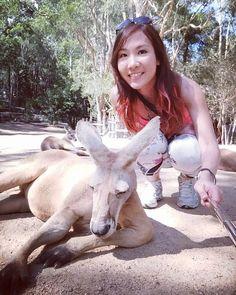 When u jus couldnt get enough of Mr kangaroo  #currumbinwildlifesanctuary #kangaroo #sjjzonholiday #australia #goldcoast #withdrawalsymptons #animallover #wildlife #goodmemoriestoremember #thegoodtimes #selfie by clariselin http://ift.tt/1X9mXhV