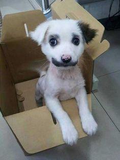 I Call Him Groucho Barkx