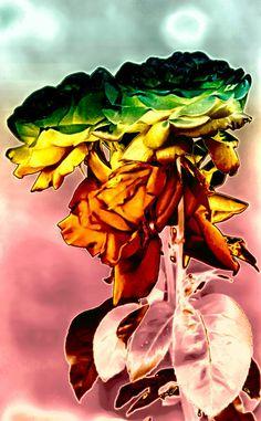 'Rosenstrauss in pastell' von Rudolf Büttner bei artflakes.com als Poster oder Kunstdruck $18.03