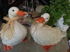 Patos del amor 😍