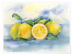 Premium-Poster Zitronen Poster Jitka Krause Lemons on Posterlounge ✔ Free delivery ✔ Purchase on account ✔ various materials and formats … Lemon Painting, Lemon Watercolor, Fruit Painting, Pour Painting, Painting Videos, Painting Lessons, Lemon Pictures, Fruits Drawing, Watercolor Architecture