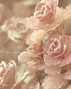 Pink Beauty <3