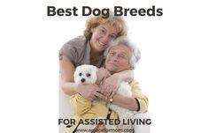 Best Dog Breeds for Assisted Living