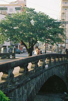 Cat walking on a bridge | Flickr