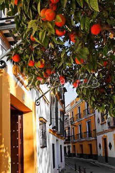la naranja sevillana
