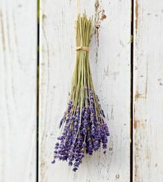To dry lavender for crafts or sachets, pick bunches just before buds open to ensure flowers stay on stems and hold their aroma. To finish the process, bundle stems by the dozen and hang upside down in a dark, well-ventilated space.