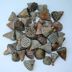 Lotus Pods-Small lotus pods-Botanical-Miniature pods-Bag of 12 pods