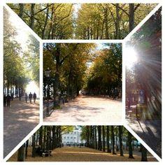 """""""Herfst"""", Den Haag. Onderweg.  Mijn eigen foto's. 10-10-2015."""