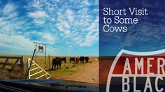 Cows Are Awesome: Road Trip - A Short Visit Toward Roswell New Mexico