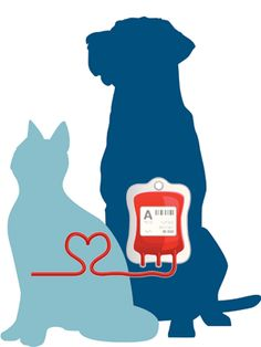 Dog saves cat with blood transfusion -- animals can be blood donors too!