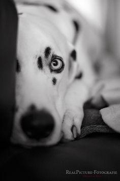 BLACK & WHITE by Kerstin Benz  on 500px