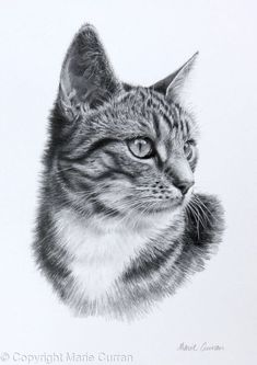 Animal Sketches, Animal Drawings, Pencil Drawings, Drawing Animals, Hulk Sketch, Cat Sketch, Face Line Drawing, Cat Drawing, Cat Portrait Tattoos