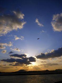 夕焼けと鳶(トビ) [撮影:今津干潟(福岡県福岡市西区)]  Sunset & Milvus Migrans [Photo:Imazu Mudflat(Fukuoka, Japan)]