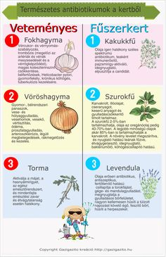 Requisites Of The Home Vegetable Garden Garden Soil, Garden Table, Herb Garden, Home Vegetable Garden, Home And Garden, Low Growing Shrubs, Hedges, Amazing Gardens, Gardening Tips