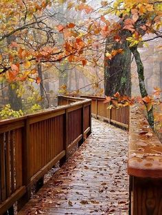 Autumn walks on rainy, wet boardwalk pathways. Autumn Cozy, Autumn Fall, Winter, All Nature, Autumn Nature, Flowers Nature, Autumn Aesthetic, Autumn Photography, Photography Flowers