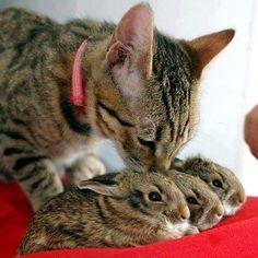 cat & bunnies