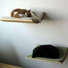 Kedi - Yatak - Tasarım