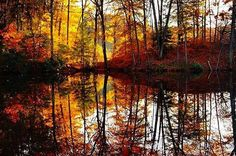 #FallFoliage in full reflect at Durand Eastman Park #RochesterNY  Shared by Kimberly. #ThisIsROC #ROC