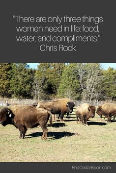 5 new pregnant girls at Red Cedar Bison and they love compliments.
