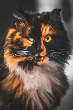 Looking into the soul of a stray cat.