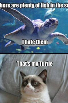 """""""There's plenty of fish in the sea & I hate them."""" """"That's my turtle."""""""