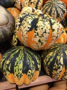 All About Squash. Carnival Squash - The party animal in the squash family, these pumpkin-shaped squash are splashed with fall colors and have a sweet potato-like flavor.