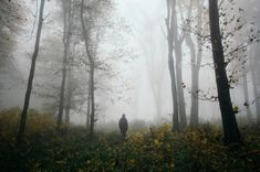 walking in the woods - Google Search Gothic Halloween, Walk In The Woods, Weathered Wood, Landscape Lighting, Ethereal, Surrealism, Mists, Fairy Tales, Fantasy
