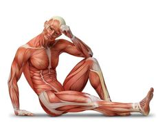 directional terms for the human body examples - Google Search