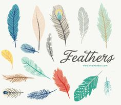 Feathers are like Snowflakes...  feather art | feather illustrations | feather tattoo | tattoo ideas | tattoo inspiration
