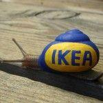 Saving Snail Shells! The Snailpimp Project By Stefan Siverud – stupidDOPE