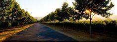 Trefethen Family Vineyards | Lodging Partners | 866.895.7696