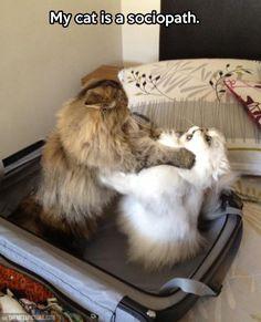 Sociopath Cat…hahahaha