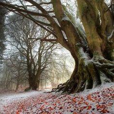 First Snowfall, Kinclaven, Scotland by HeavenInACoffeeCup