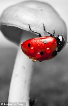 Ladybird is the star of dewy photo shoot: Amateur snapper captures close-ups of bugs in his back garden | Mail Online