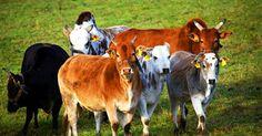 Ganadería colombiana    Tabla de contenidos   1 La Importancia de la ganadería colombiana  1.1 Factores de influencia en el mercado de la ganadería colombiana  1.1.1 Objetivos de producción en la ganadería colombiana  1.1.2 Más de mi sitio