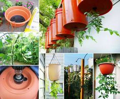 You'll love this Upside Down Tomatoes DIY and we show you how with a video tutorial plus what the most flavoursome varieties to grow are.