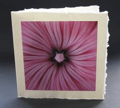 Unique greetings card design for every occasion, photograph by Jonathan Leach. Card without a specific written message. This beautiful close up of a mallow flower is mounted on handmade Indian paper and comes complete with a handmade paper envelope. All profits from this card sale goes to support the charity lepra. Price £3.50 including P&P.
