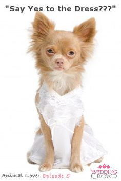 Should this cute puppy say yes to the dress?