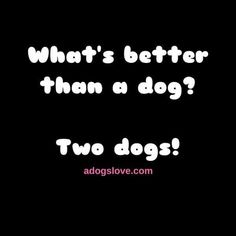 Or threeor sixor ten! Funny Dog Quotes The p - Funny Dog Quotes - Or threeor sixor ten! Funny Dog Quotes The post Or threeor sixor ten! appeared first on Gag Dad. The post Or threeor sixor ten! Funny Dog Quotes The p appeared first on Gag Dad. All Dogs, I Love Dogs, Puppy Love, Cute Dogs, Dogs And Puppies, Doggies, Dog Quotes Funny, Funny Dogs, Dog Sayings