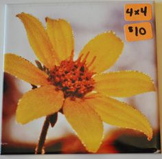 Photos on Ceramic Tile by AnotherTessCreation on Etsy, $10.00