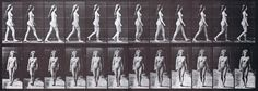 large nude female walking using muybridge plate 17 as animation reference with profile and rear views